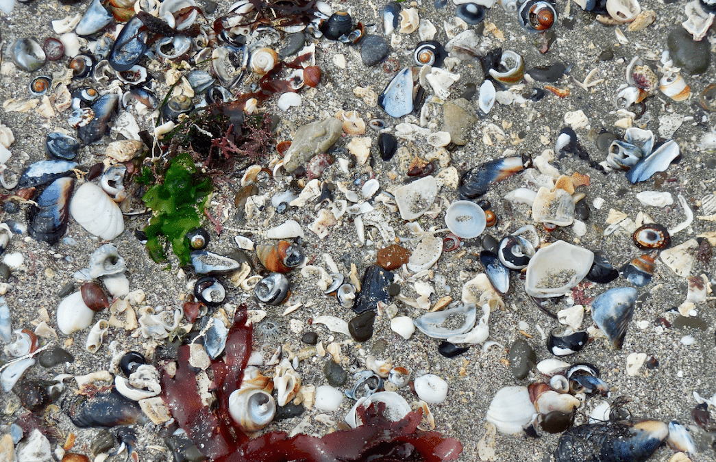 Beach Debris | Photography