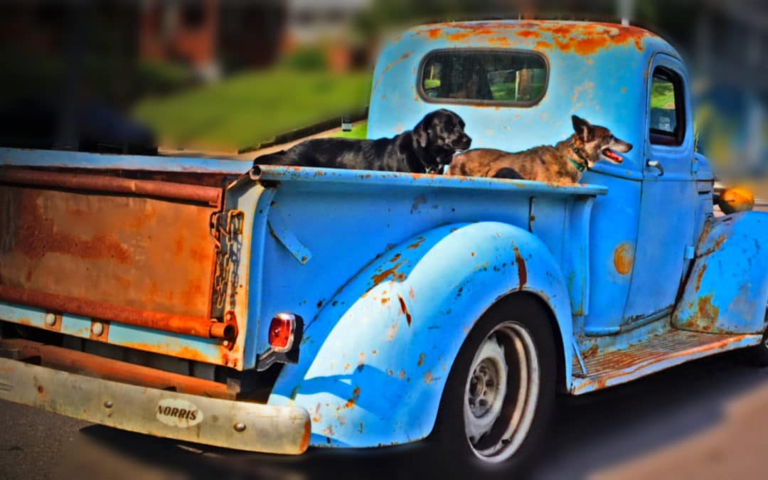 Old Truck and Good Dogs